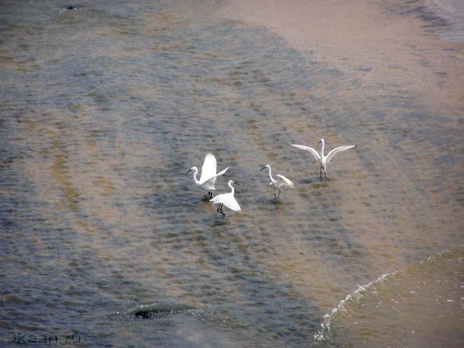 Танец белых птиц