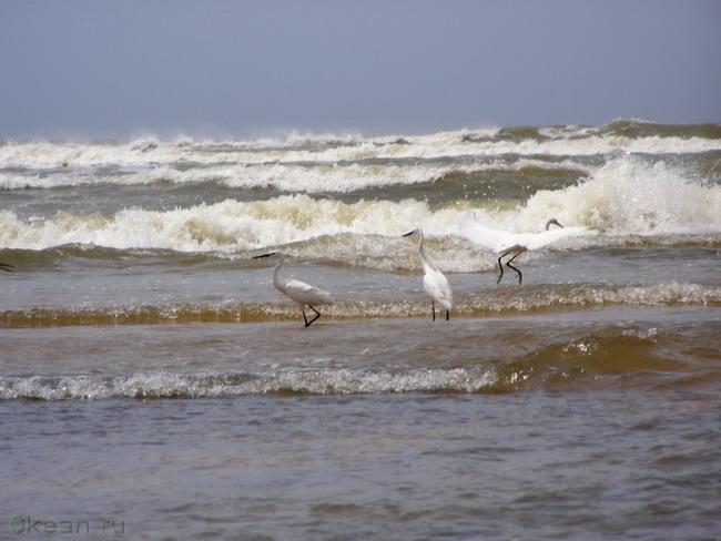 Сливаясь с гребнем волны...
