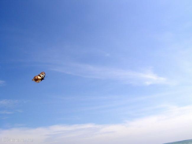 Полет бабочки над Океаном