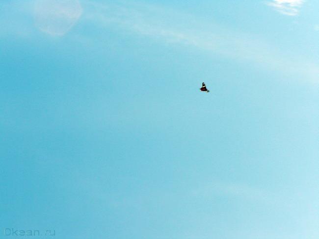 Бабочкой в небо!